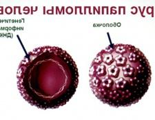 Вірус папіломи людини наслідки і протікання хвороби у жінок